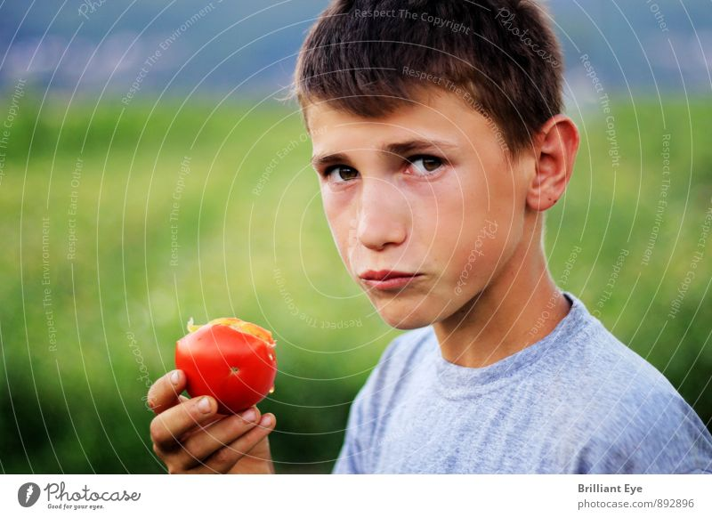 Boy eats freshly picked tomato Vegetable fruit Eating Organic produce Lifestyle Summer Agriculture Forestry Masculine Boy (child) 1 Human being 3 - 8 years