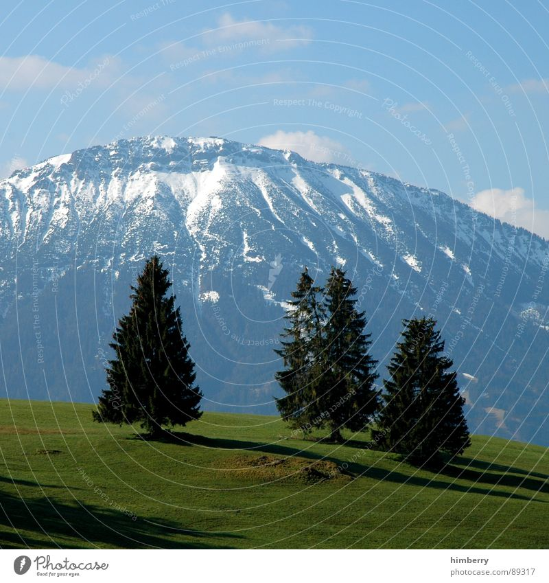 Nature Sky Tree Green Plant Summer Clouds Snow Meadow Grass Mountain Spring Landscape Environment Allgäu Wilderness