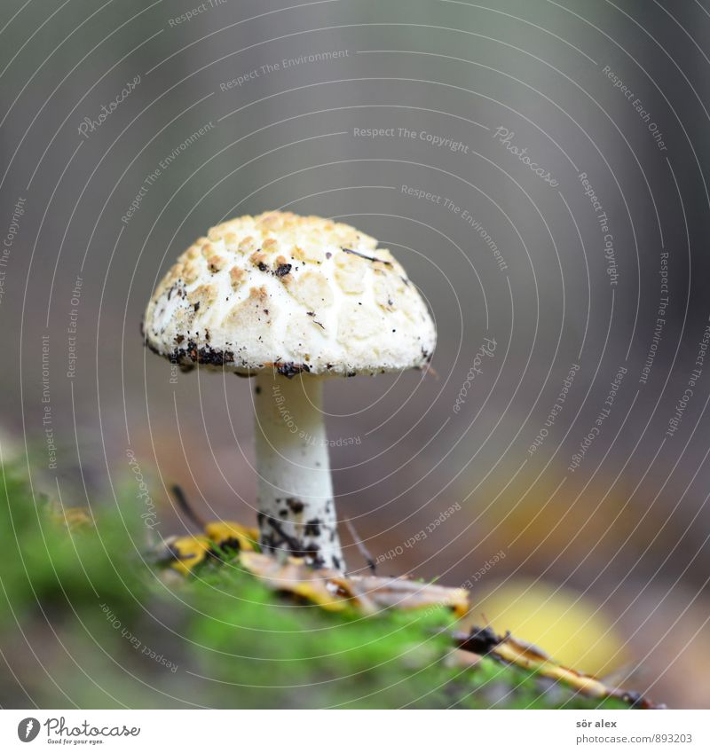Nature Plant Loneliness Forest Environment Mushroom Sustainability Woodground Mushroom cap