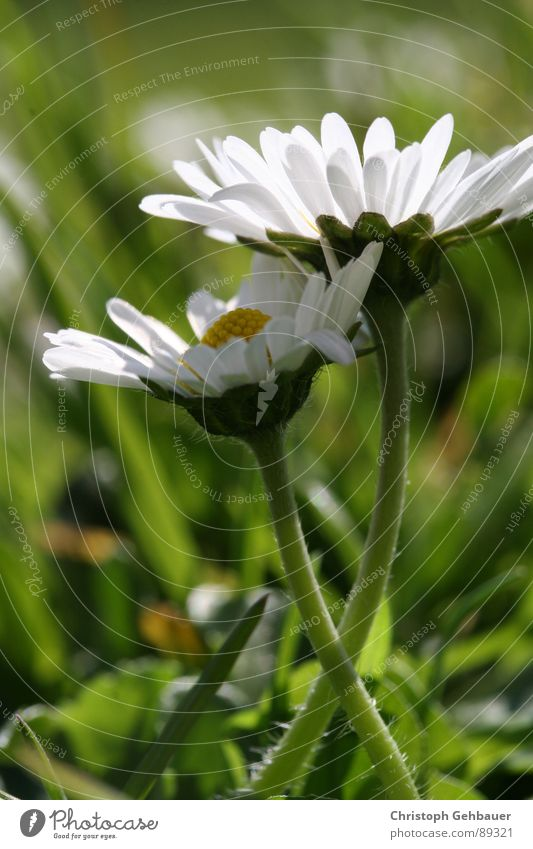 Nature Flower Green Summer Love Meadow Spring Together Trust Daisy Meadow flower
