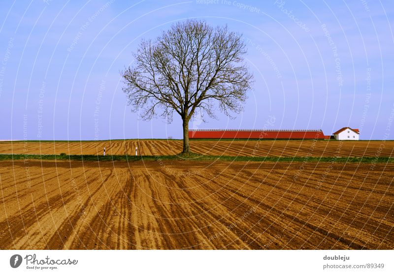 silent and dumb Tree Field House (Residential Structure) Clouds Wood Empty Plant Roof Loneliness Deserted Sky Bright Graffiti Street Branch unplanted