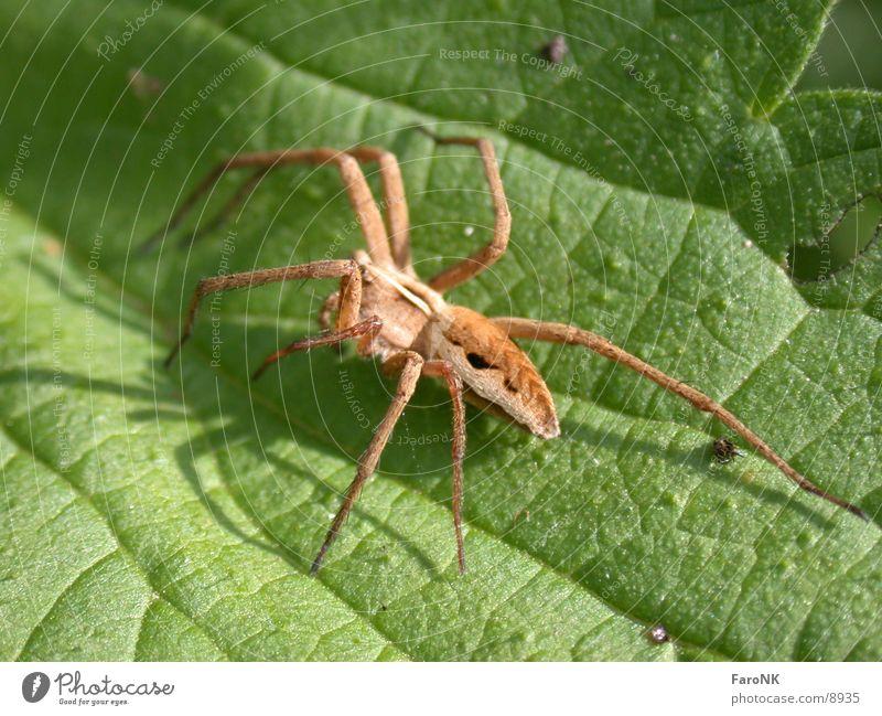 spider Animal Spider Nature