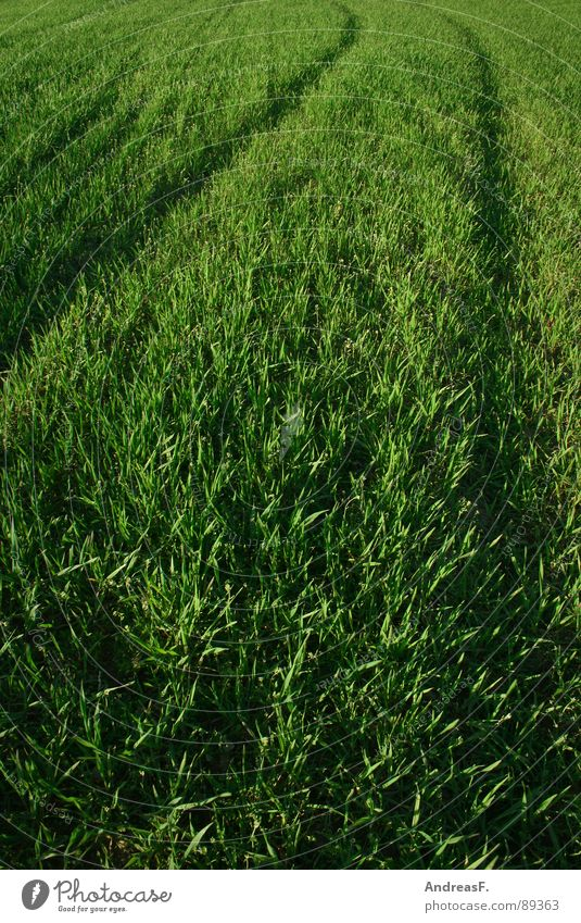 Nature Green Plant Summer Grass Spring Field Earth Fresh Tracks Grain Agriculture Footpath Cornfield Juicy Wheat