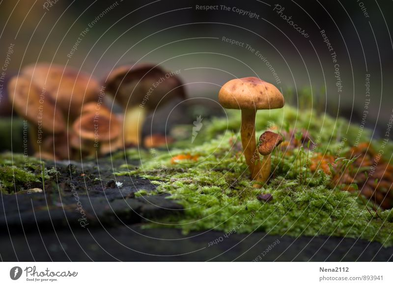 Nature Plant Green Forest Environment Autumn Brown Earth Beautiful weather To go for a walk Moss Mushroom Damp Edge of the forest Wetlands