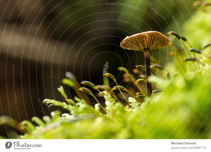 Nature Green Forest Environment Natural Brown Growth Upward Mushroom Stretching