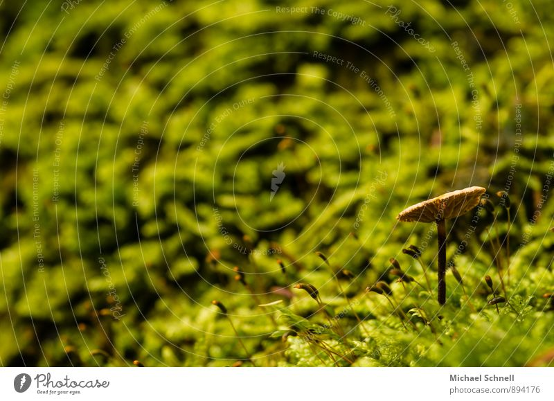 towards the light Environment Nature Earth Mushroom Forest Natural Brown Green Calm Stretching Upward Colour photo Exterior shot Close-up Copy Space left