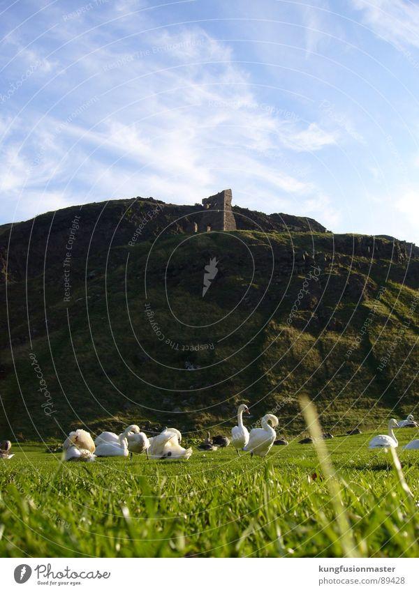 Swan lake for the poor - Gänseberg Goose Grass Ruin Green Spring Bird Mountain Blue Idyll your gülle Castle