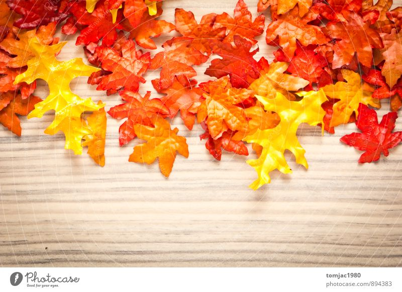 Nature Plant Leaf Autumn Wood Background picture Brown Decoration Break Harmonious Meditation Autumn leaves Autumnal Autumnal colours Rustic