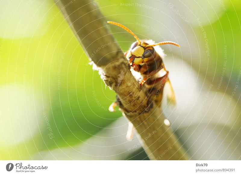 Knight of the skies Nature Sunlight Summer Beautiful weather Plant Tree Bushes Lilac Twigs and branches Tree bark Garden Animal Wild animal Insect Wasps Hornet
