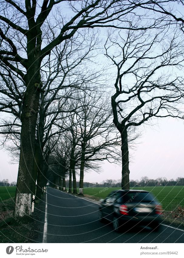 Tree Car Trip Transport Speed Dangerous Safety Threat Lawn Avenue Road traffic Roadside Country road Document Road safety