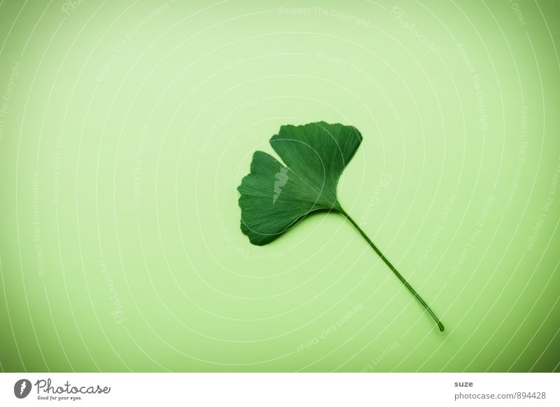 Beautiful Green Relaxation Leaf Calm Healthy Eating Natural Health care Lifestyle Growth Contentment Esthetic Individual Simple Joie de vivre (Vitality)
