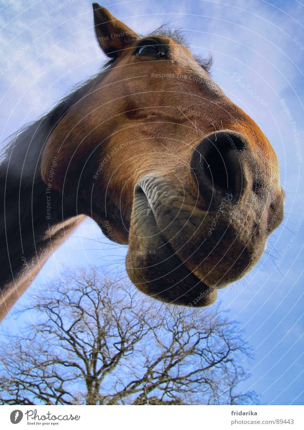 the house horse Nature Animal Tree Farm animal Horse 1 Blue Brown Horse's head Nostrils Mammal equus caballus Colour photo Close-up Muzzle Day