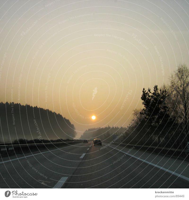 Tree Sun Forest Lamp Freedom Car Warmth Fog Transport Speed Driving Logistics Switzerland Physics Longing Highway