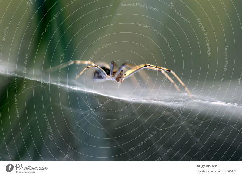 Animal Dark Natural Contentment Near Creepy Spider Precision