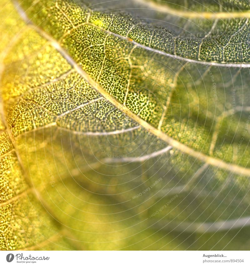 between summer & autumn... Nature Leaf Foliage plant Meadow Glittering Near Warmth Yellow Green Beautiful Close-up Macro (Extreme close-up) Deserted Light