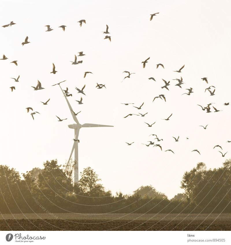 fly Energy industry Wind energy plant Sky Tree Field Bird Flock Movement Flying Power Beginning Resolve Ease Performance Pinwheel Flock of birds Airspace