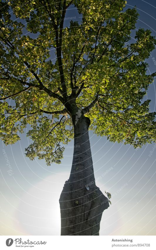 tree Environment Nature Plant Air Sky Cloudless sky Sun Sunlight Summer Weather Beautiful weather Tree Leaf Park Vienna Stand Blue Yellow Green Black