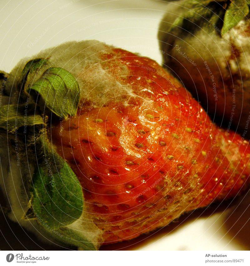 Green Red Nutrition Food Fruit Sweet Transience Putrefy Delicious Mushroom Berries Vitamin Strawberry Sense of taste Vegetarian diet