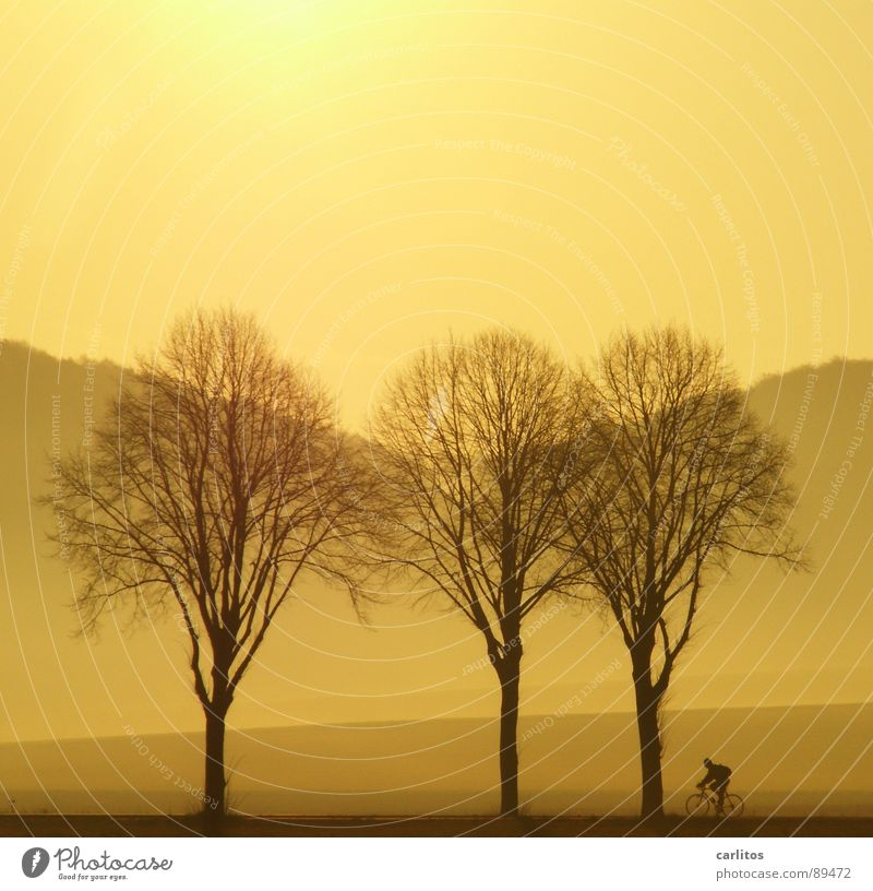 Tree Sun Landscape Mountain Bicycle Fog Leisure and hobbies Hill Cycling Avenue Dazzle In transit Rural Country road Monochrome Cycle path