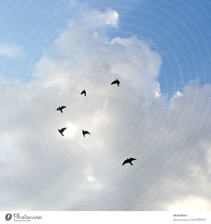 Sky Nature Blue White Vacation & Travel Animal Clouds Above Freedom Movement Lanes & trails Air Moody Bird Flying Free