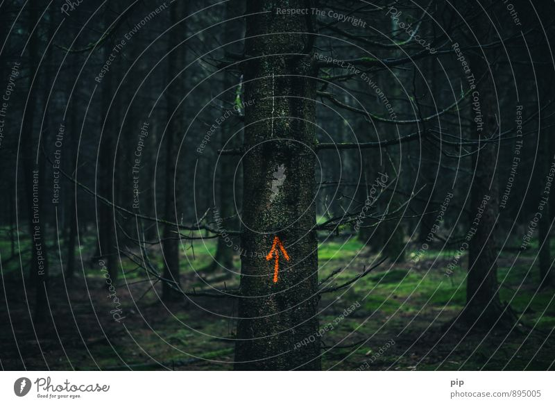 high forest Tree Moss Spruce forest Fir tree Tree trunk Forest Clearing Dark Creepy Orange Fear Dangerous Arrow Trend-setting Eerie Calm Criminality