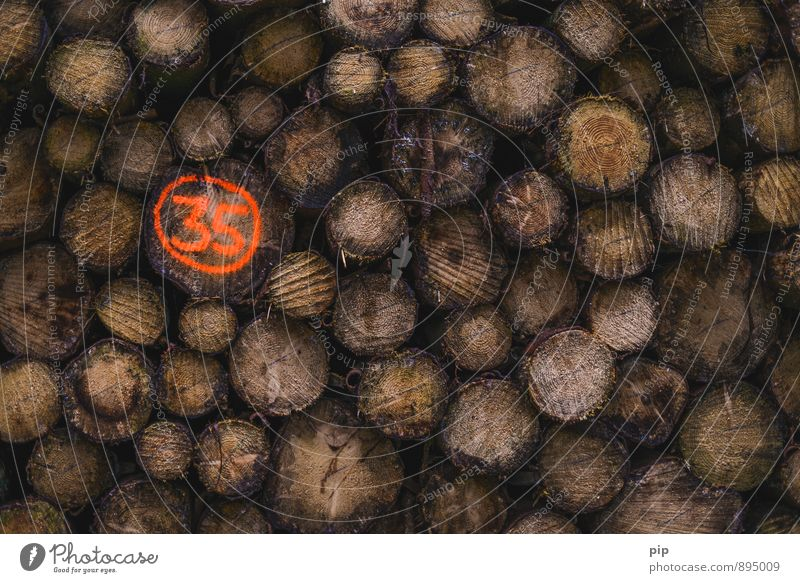 root number Tree Tree trunk Forest Orange Wood Forestry Forstwald Digits and numbers 35 Firewood Logging Colour photo Abstract Deserted Copy Space right