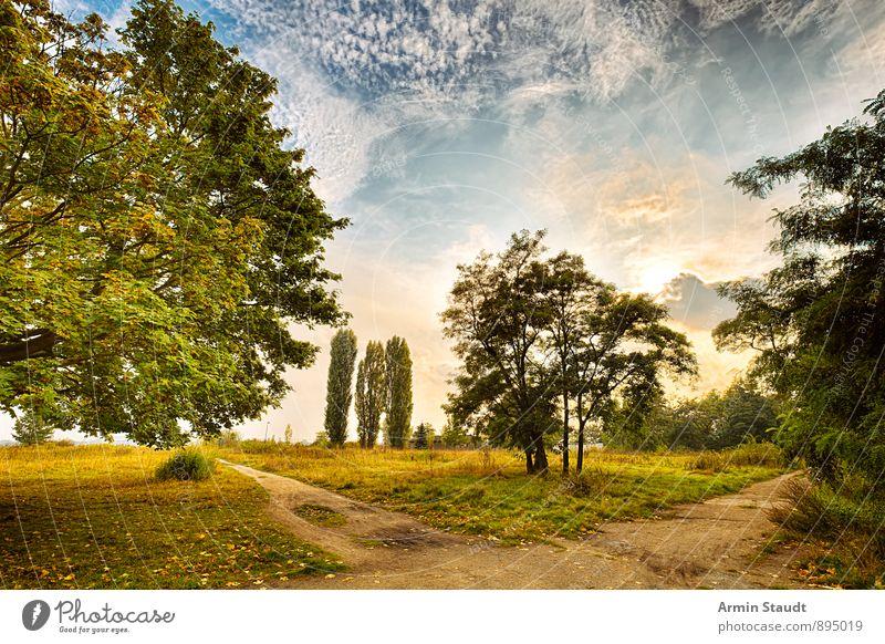 Sky Nature Beautiful Sun Tree Landscape Calm Clouds Forest Meadow Autumn Berlin Art Moody Germany Park