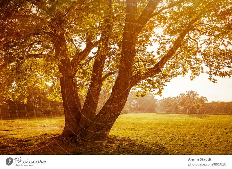 Tree - Autumn Nature Landscape Plant Sky Sunrise Sunset Sunlight Summer Beautiful weather Park Meadow Forest Berlin Esthetic Large Moody Environment clouds