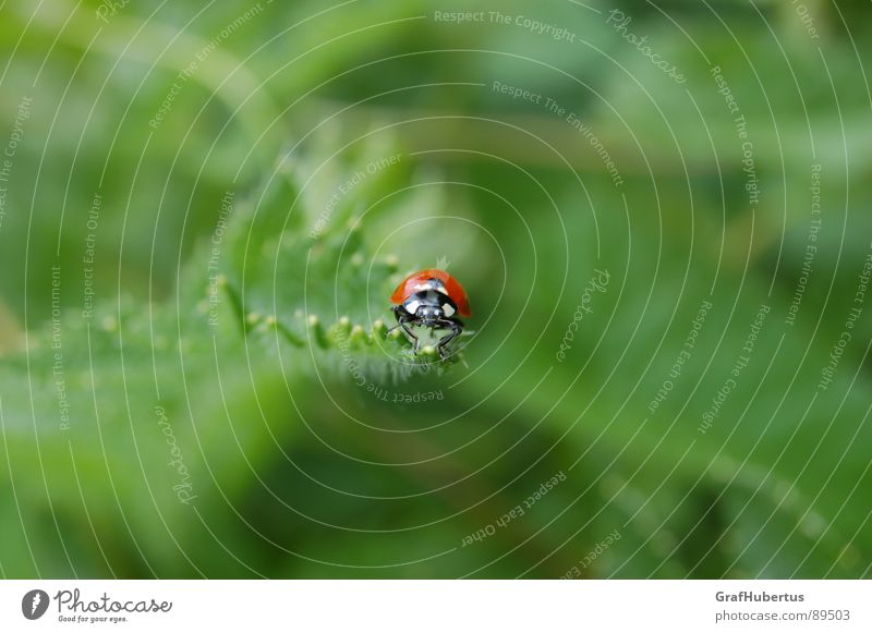 Nature Green Summer Animal Happy Insect Ladybird Good luck charm