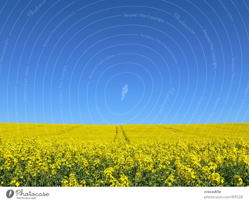 Sky Yellow Spring Field Stripe Stalk Blossoming Agriculture Beautiful weather Ecological Organic produce Production Canola Climate change Tractor Carbon dioxide