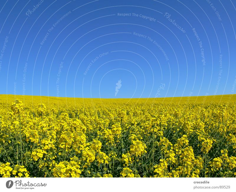 rap #2 Canola Field Spring Ecological Diesel Carbon dioxide Climate change Yellow Stripe Stalk Oxygen Agriculture Leaf green Organic produce Blossoming Sky