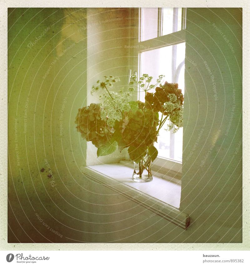 to be niche. Living or residing Flat (apartment) Arrange Interior design Decoration Flower Wall (barrier) Wall (building) Window Vase Blossoming Stand Fresh