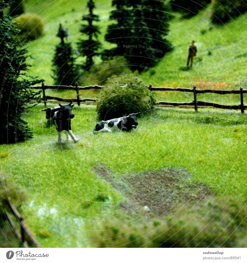 Human being Model-making Lawn Leisure and hobbies Farmer Cow Pasture Fence Miniature Dairy Products Model railroad
