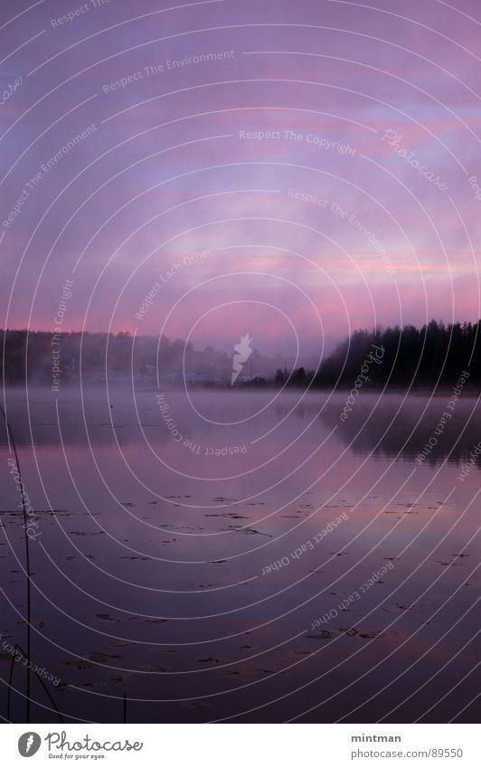 Nature Water Forest Lake Landscape Fog Mystic