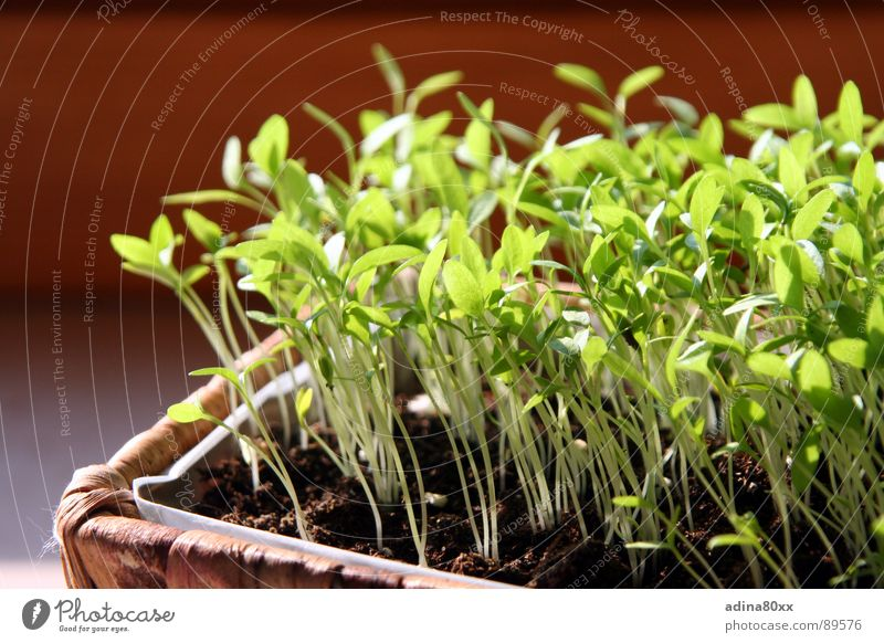 grow together... Parsley Spring Herbs and spices Small Caresses Germ Sow Growth Green Birth Death New start Life Sowing Productive Together Society Kitchen