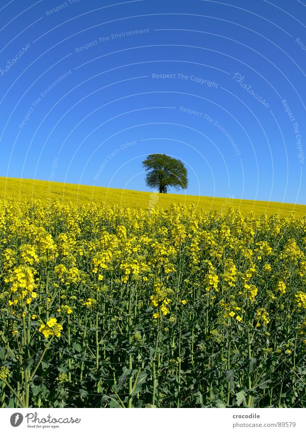 rap #6 Canola Field Spring Ecological Diesel Carbon dioxide Climate change Yellow Stripe Stalk Oxygen Leaf green Tree Loneliness Organic produce Blossoming Sky