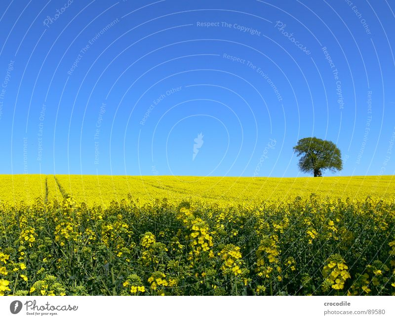 Sky Tree Loneliness Yellow Spring Field Stripe Stalk Blossoming Agriculture Tree trunk Beautiful weather Ecological Organic produce Production Canola