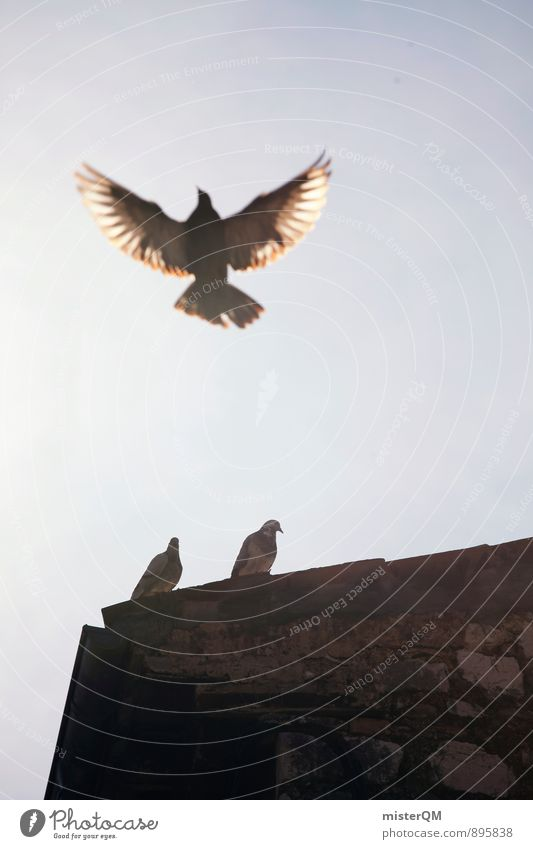 fly. Art Esthetic Contentment Flying Pigeon Dovecote Dove-cotes Wing Freedom 3 Bird Bird's-eye view Air Ease Span Roof Colour photo Subdued colour Exterior shot