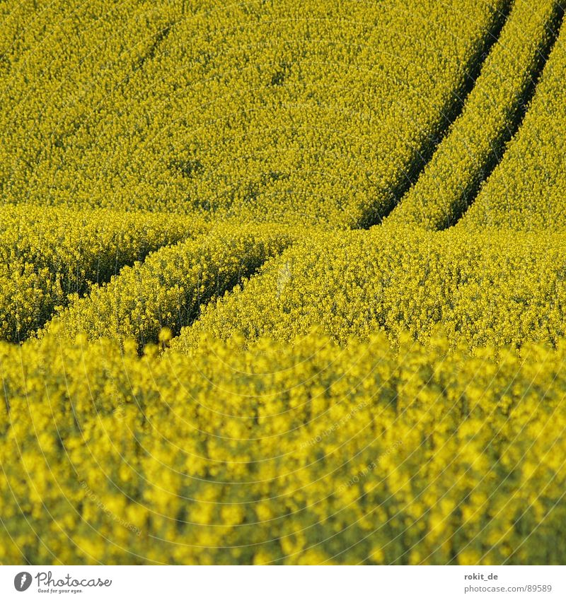 Yellow mountain and valley lift Canola Tracks Parallel Field Bio-diesel Middle Spring useful plant Odor Upward Downward mountain and valley railway