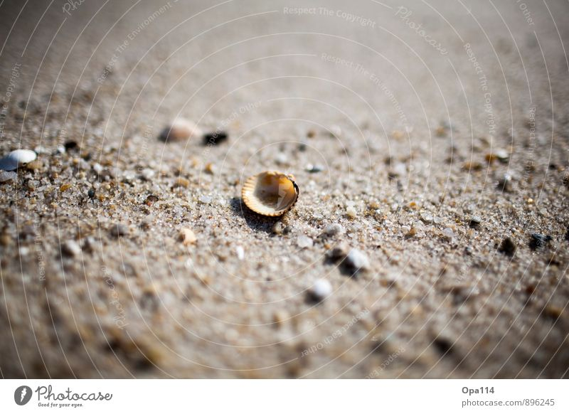 "seashell Environment Nature Plant Animal Summer Coast Beach North Sea Ocean Island Lie Wait Protection ""Loneliness by oneself Sylt Sand seashells Mussel stones"