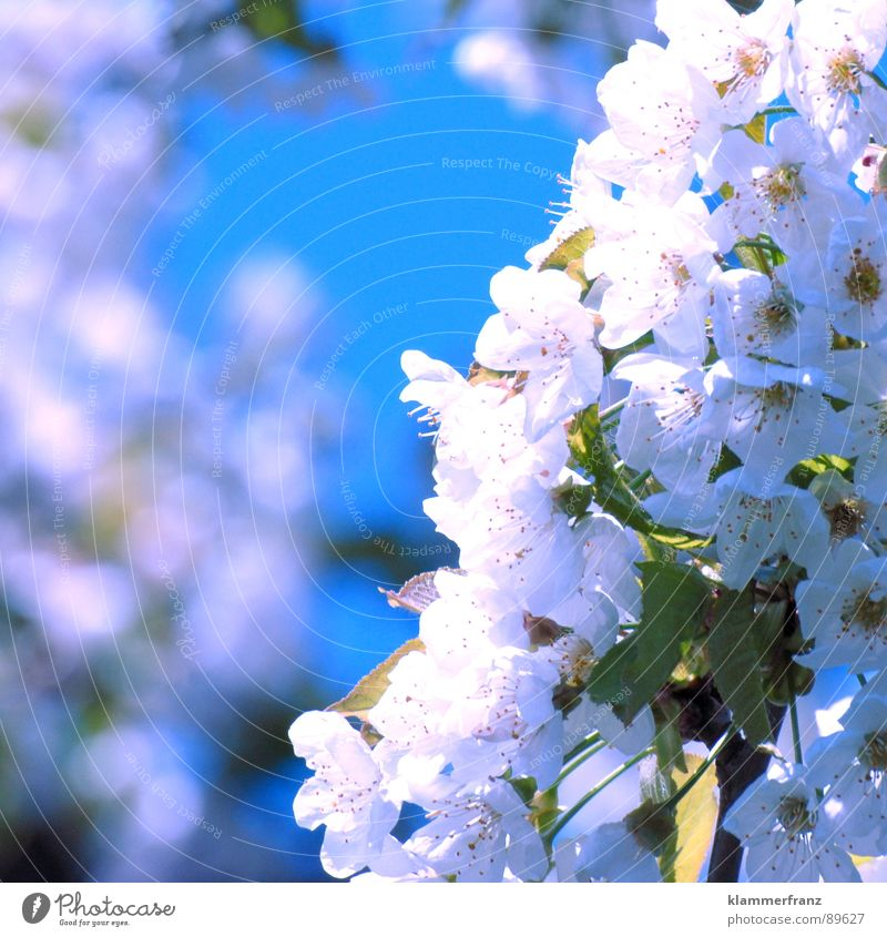 Sky White Tree Sun Blue Plant Red Far-off places Life Blossom Movement Spring Air Bright Brown Fruit