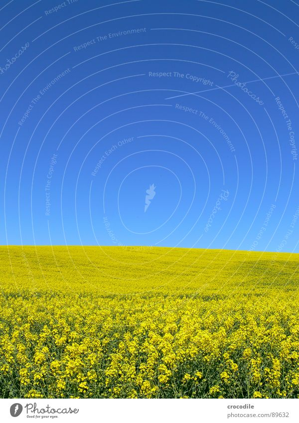 biofuel and air pollutants... #1 Airplane Covers (Construction) Exhaust gas Vacation & Travel Canola Field Spring Diesel Carbon dioxide Climate change Yellow