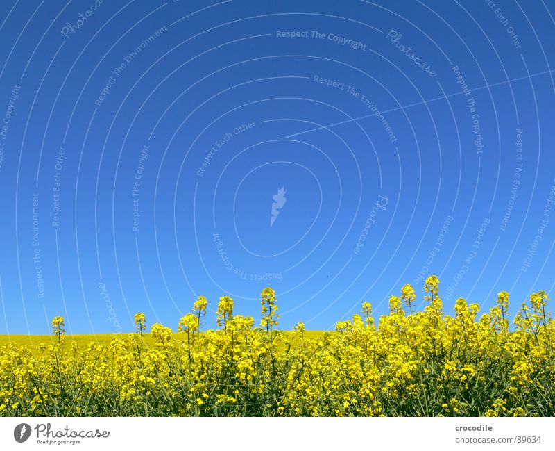 Sky Vacation & Travel Yellow Spring Freedom Ice Field Airplane Flying Stripe Stalk Blossoming Agriculture Exhaust gas Beautiful weather Organic produce