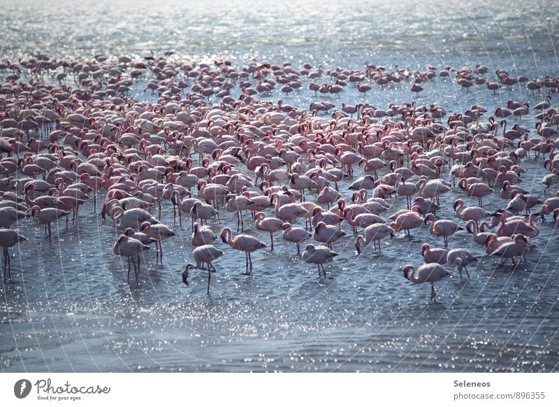 Nature Vacation & Travel Water Summer Sun Ocean Animal Beach Far-off places Environment Coast Freedom Bird Together Wild animal Tourism