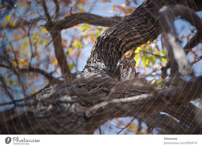 Sky Nature Tree Animal Environment Natural Small Bird Wild animal Wing Branch Observe Beautiful weather Branchage Safari Owl birds