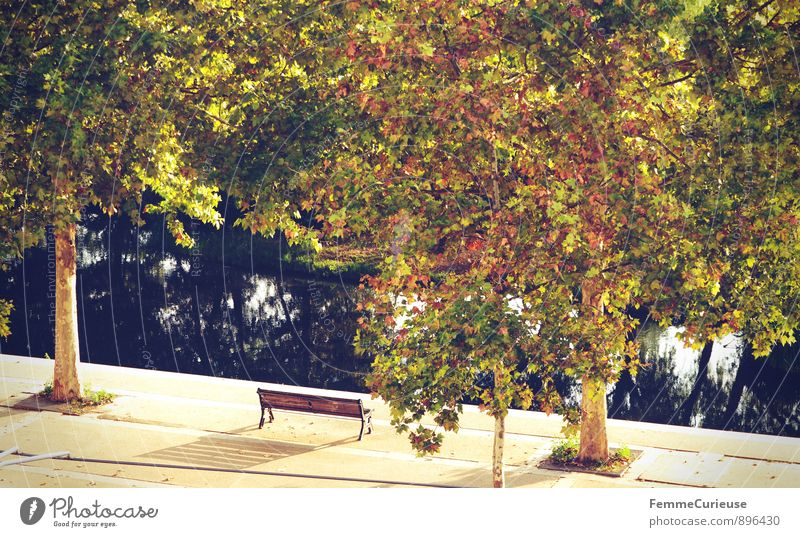 Nature Summer Tree Relaxation Leaf Calm Autumn Garden Park Idyll Empty Footpath Tree trunk Bench River bank Treetop