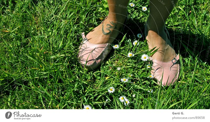 easy going Footwear Moccasin Leather shoes Sandal Summery Sunbathing Tattoo Characters India Symbols and metaphors Grass Meadow Daisy Marguerite Buckle Pink
