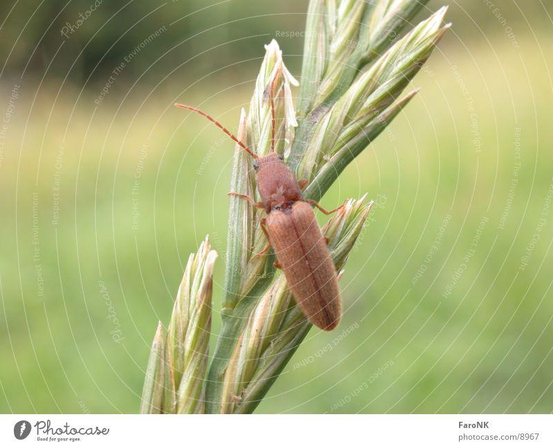 bug Insect Beetle
