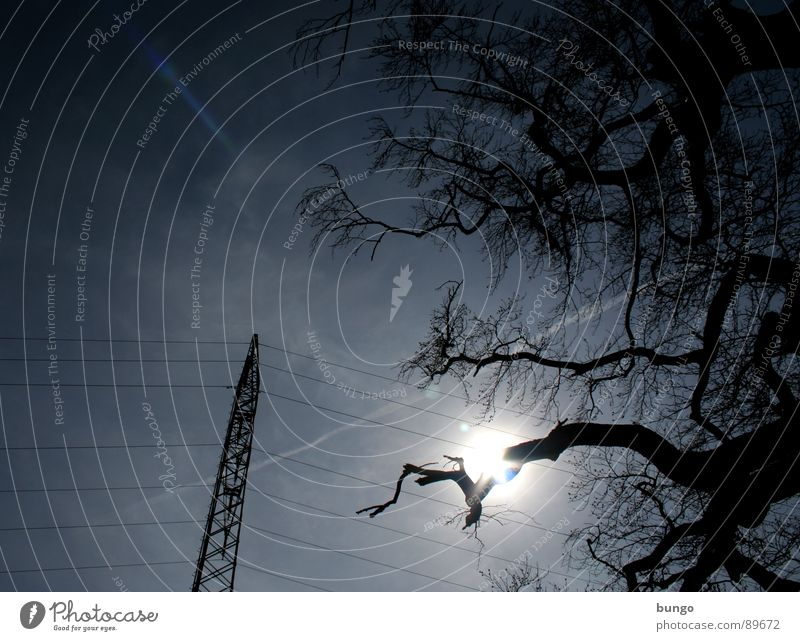 Nature Sky Tree Plant Clouds Dark Line Moody Metal Weather Tall Energy industry Electricity Cable Threat Branch