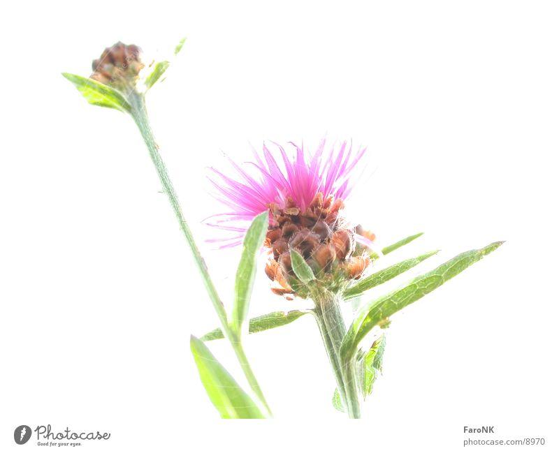 flower Flower Plant White Photographic technology